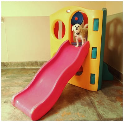 A Pet Villa